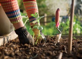 Worm Casting - Organic Fertilizer